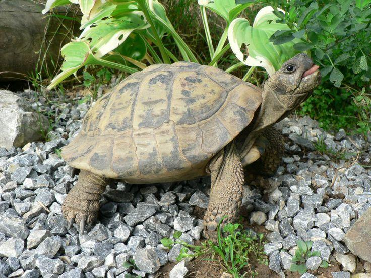 les 25 meilleures id es de la cat gorie terrarium tortue de terre sur pinterest terrarium. Black Bedroom Furniture Sets. Home Design Ideas