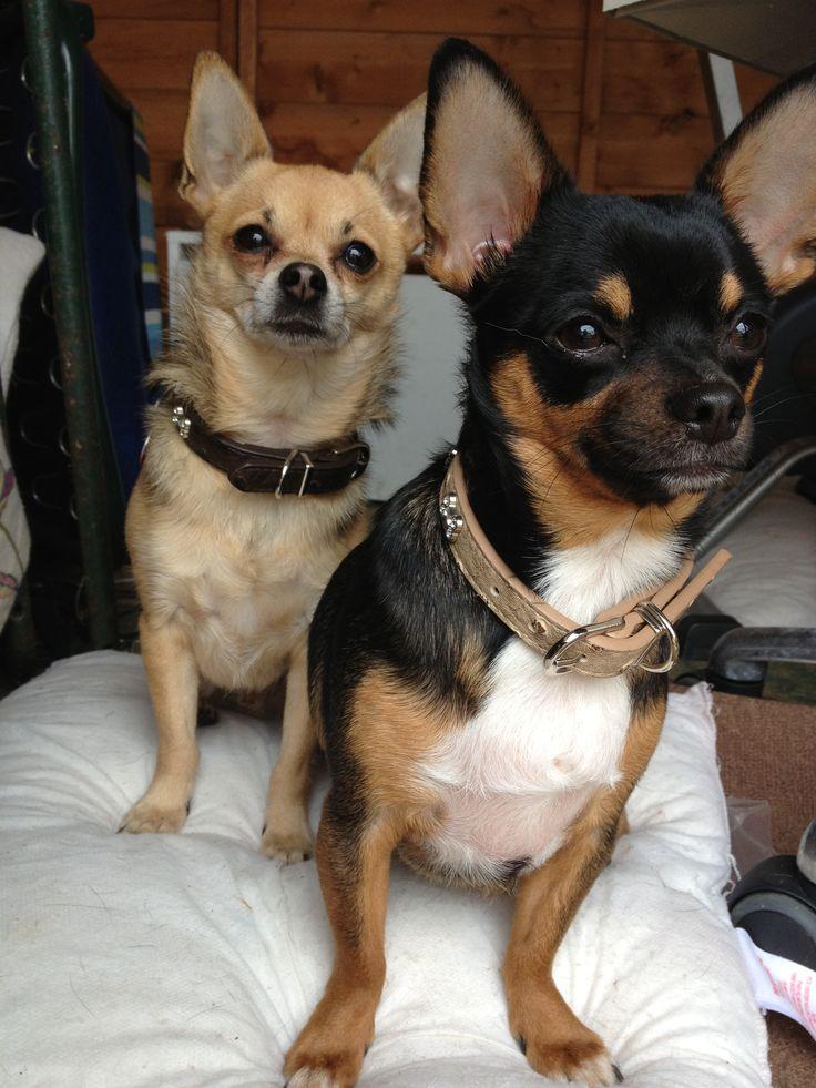 My little watch dogs