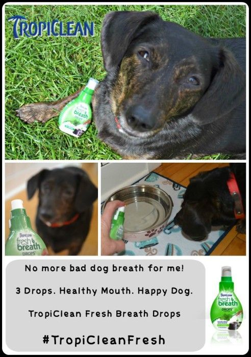Natural Remedies For Dog Tooth Decay