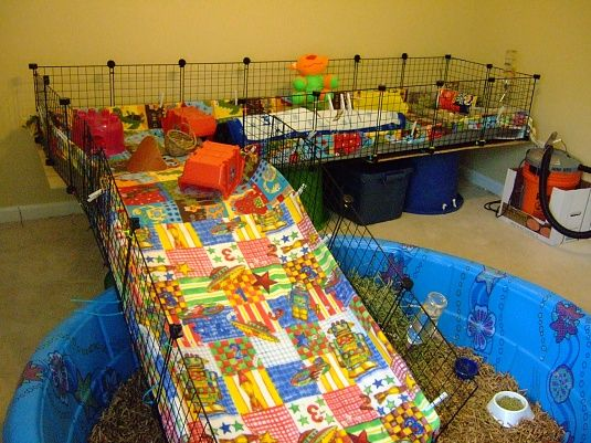 Open Cage - Blogs - Guinea Pig Cages, Care, Photos, News, Forum, Blogs and Chat