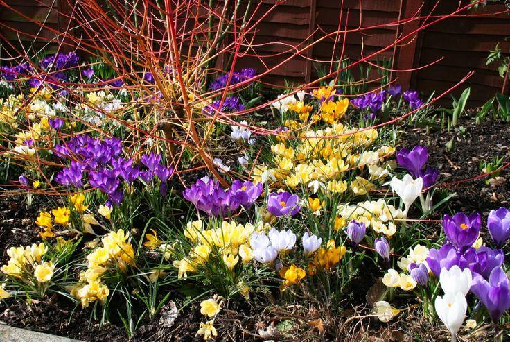 winter flowers in canada