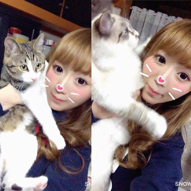 左♡藍(あい)♀ 右♡天(てん)♂ #愛猫 #双子猫