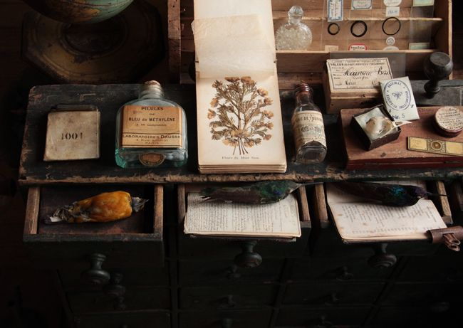 Daryl McMahon: From Apothecary to Wunderkammer...
