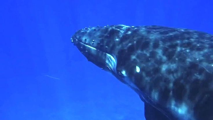 Whales for Kids, Whale Videos for Children, Ocean Whale Video