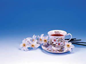Bebida Chá Alimentos