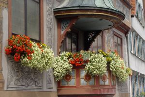 Балконные цветы для души и радости  http://www.dostavka-tsvetov.com/news/balkonnye_cvety_dlja_dushi_i_radosti/2014-04-04-366