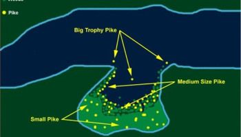 WHERE  TO  FIND  BIG  NORTHERN  PIKE