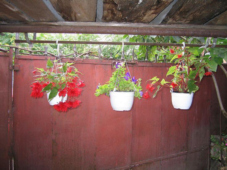 Flowers in the gardens of Bucharest #photography #digitalart #Bucharest