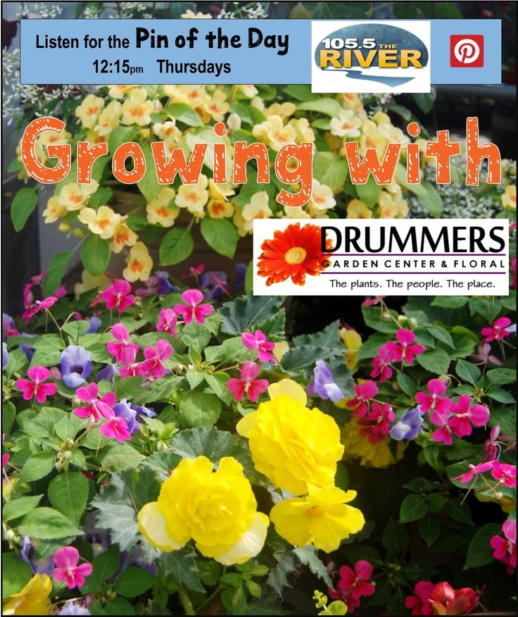 62 best Growing With Drummers images on Pinterest   Backyard ideas ...