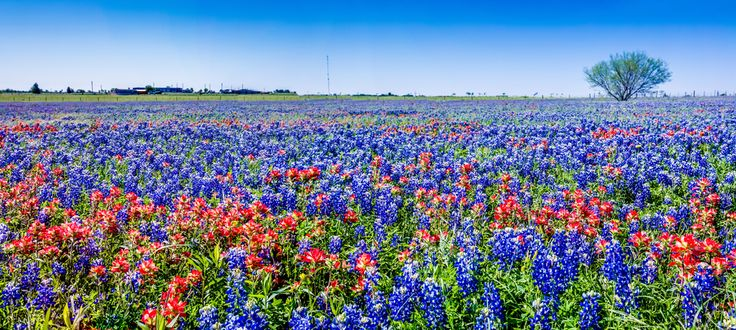 Explore miles and miles of wildflowers at Lady Bird Johnson Wildflower Center. #TexasToDo