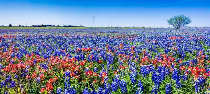 Explore miles and miles of wildflowers at Lady Bird Johnson Wildflower Center. #TexasToDo