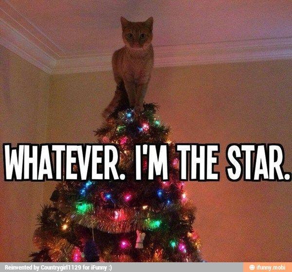 I'm the star / iFunny :)