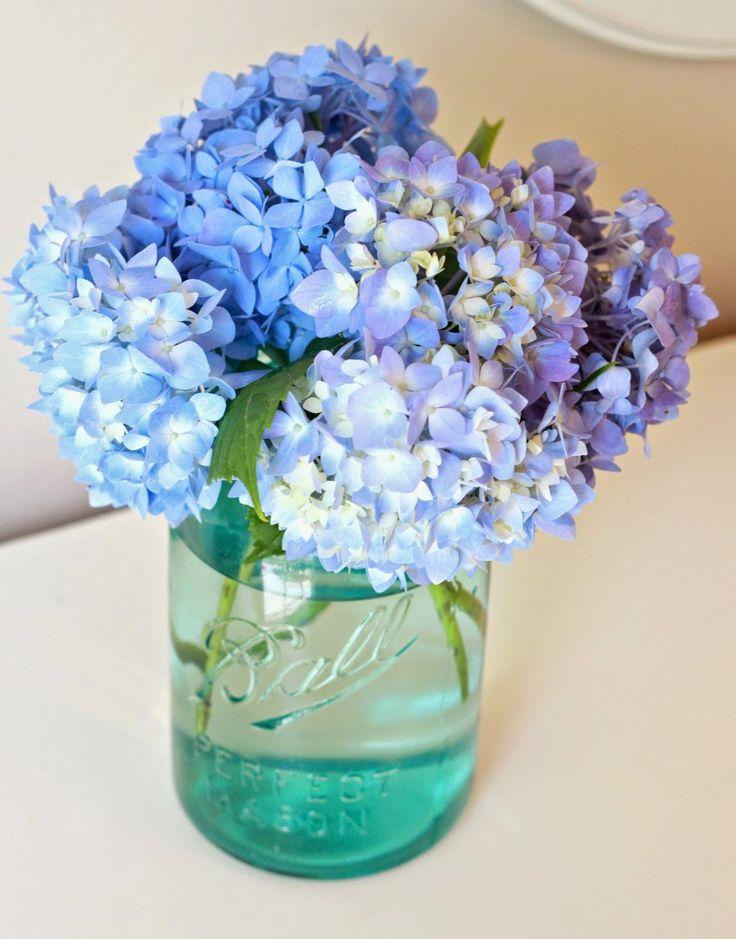 Hortensias cuidados y recomendaciones flores - Hortensias cuidados poda ...