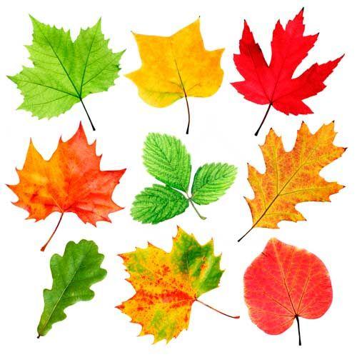 рисунок осенние листья - Google Search