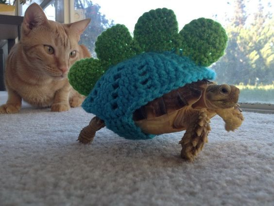"""crochet turtle in boxers 