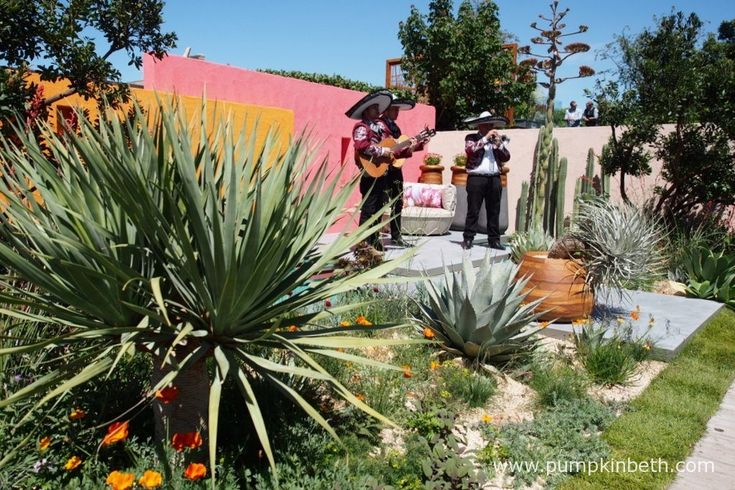 A Mexican Mariachi band play in Manoj Malde's 'Beneath a Mexican Sky' garden for Inland Homes, one of the Fresh Gardens at RHS Chelsea Flower Show 2017