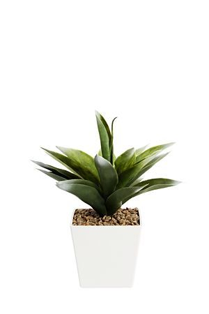 """This agave in plastic flair pot will add a urban look to any setting. ideal for you home or office space.<div class=""""pdpDescContent""""><BR /><b class=""""pdpDesc"""">Dimensions:</b><BR />L12xW12xH32 cm</div>"""