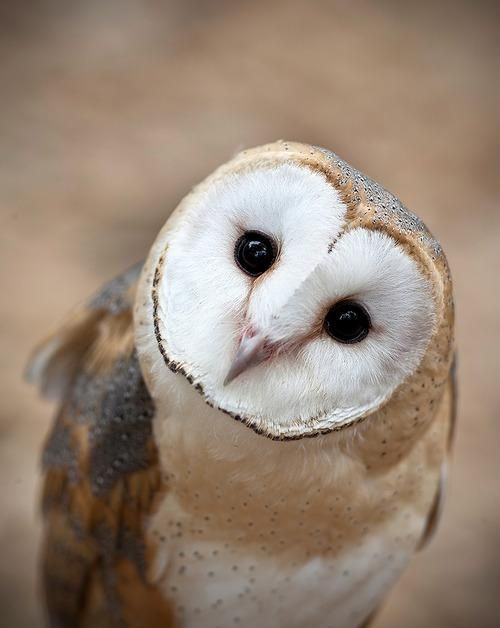 Whoooo wants to hang out with some owls at a bar in London? We do!