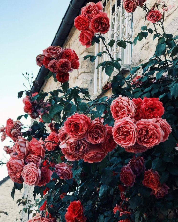 √ Die 35 schönsten Blumen der Welt – Blumen Blog