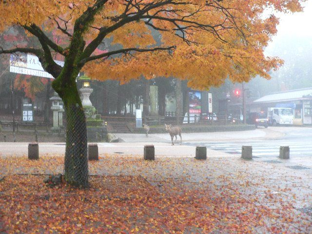 奈良公園へようこそ - 大仏前交差点付近 -141201