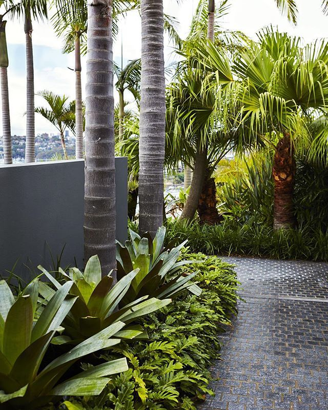Giant bromeliads, Philodendron xanadu and Cabbage Palms frame the granite cobbled pathway to the swimming pool. Very lush! Photography by @nataliehunfalvay