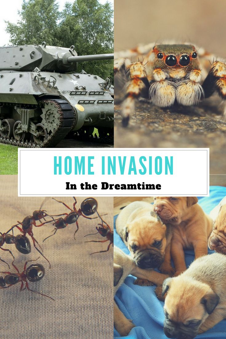 Dream Interpretation for Home Invasion by a Military Tank, Ants, Tarantula, Snakes, Lizards, and Puppies