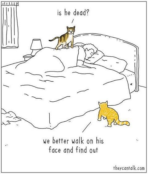 For all of my fellow cat lovers...Happy Wednesday everyone! #catlogic #wednesday #haveagreatday #catsrule #lovemycat #cats