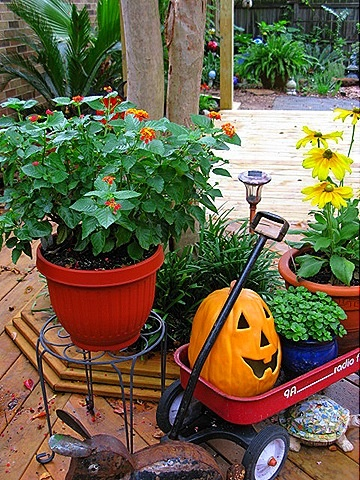 Fall decorating in the yard