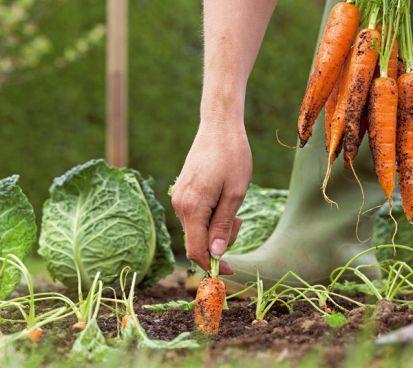Ako získať z malej záhradky veľkú úrodu