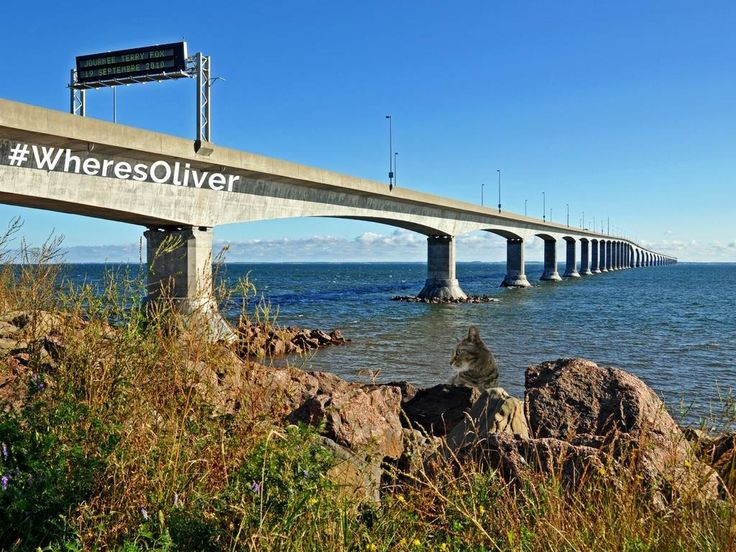 """Oliver loves to take the high road and what better place to do so than on the longest in the world crossing ice-covered water. Since 1997, the curved, 12.9 kilometre (8 mile) long Confederation Bridge has endured """"as one of Canada's top engineering achievements of the 20th century."""" Find out more at: confederationbridge.com"""