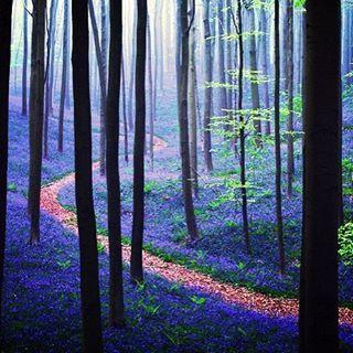 【kojiroo84】さんのInstagramをピンしています。 《#forest #mori #mountain #organic #thankyou #green #nature #photography #photographer #blue #purple #森林 #森 #ナチュラル #グリーン #ブルーベル #bluebell #nationalgeographic #魔法の森》