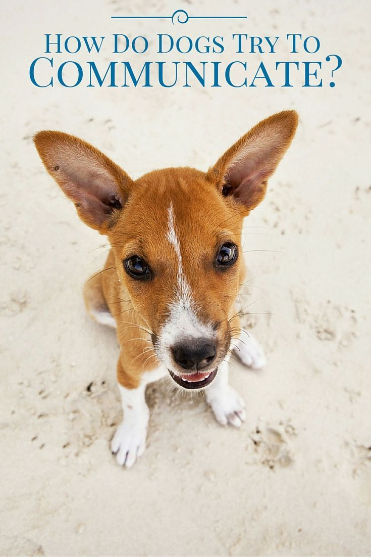 Dogs have many different ways of expressing themselves beyond barking.