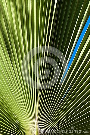 Green background of palm leaves. Close up, lines and shadows pattern.