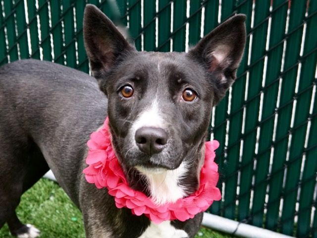 DogsInDanger MISSY in New York ** TO BE DESTROYED TODAY **History of Seizures  Needs Placement ASAP**