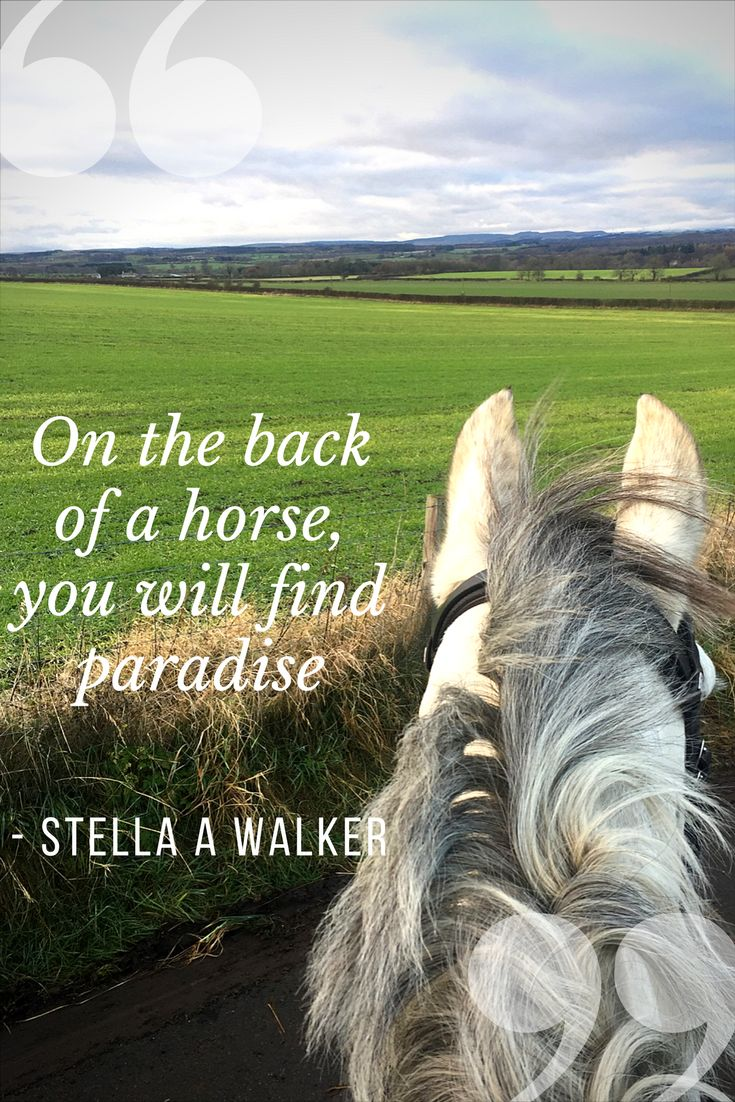 Our latest horse quote from Stella A Walker - On the back of a horse, you will find paradise. Enjoy the view! | Horse Quotes | Team Tunnah Eventing