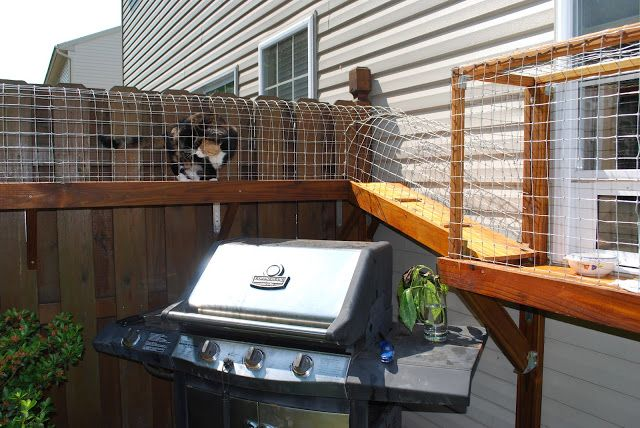 DIY outdoor cat enclosures... This lady made her cats an outdoor pen with wood, chicken wire, and a cat door made for windows.