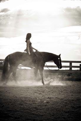 I want a photo shoot with my show pony, and I have