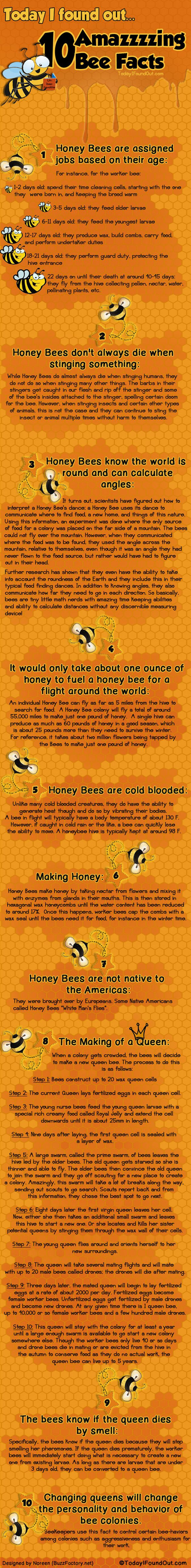 Top Ten Bee Facts – Infographic