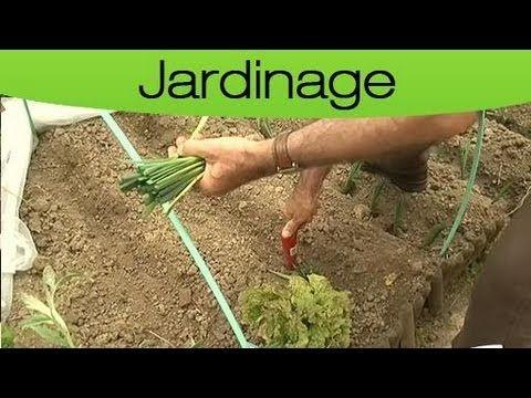 Apprendre à planter des poireaux - YouTube