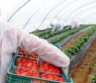 Românii au liber din 2013 în UE, pe piața muncii   Real Press