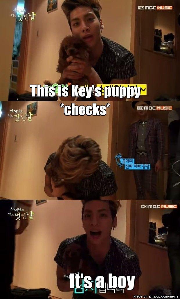 Key's puppy