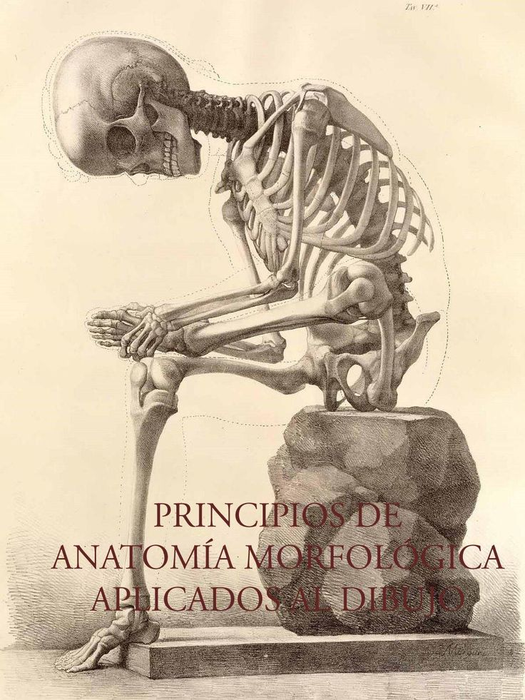 PRINCIPIOS DE ANATOMÍA MORFOLÓGICA APLICADOS AL DIBUJO I  Anatomía morfológica artística