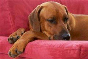 10 Calm Dog Breeds That Help You Relax #Health