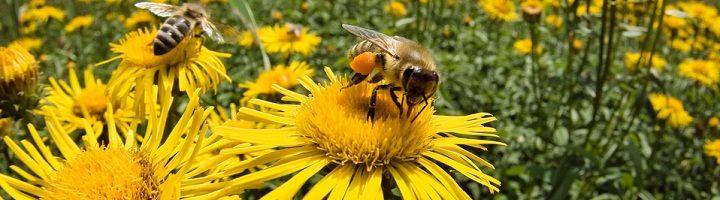 Αισθήσεις των μελισσών
