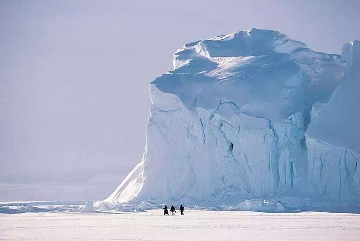 северный полюс: 21 тыс изображений найдено в Яндекс.Картинках