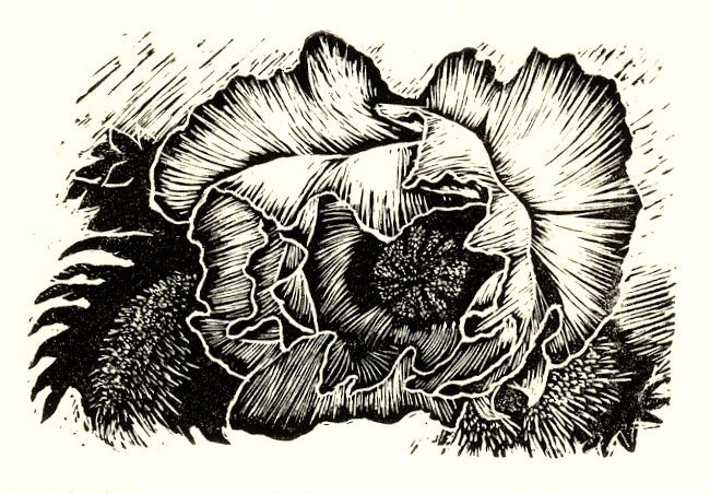 Wood engraving 2x3 inches, my first attempt!