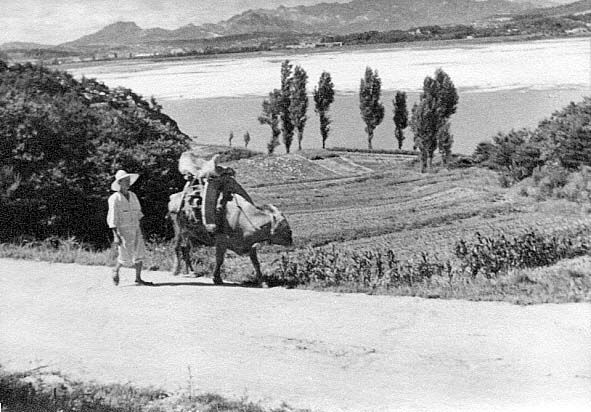 Photo by Jung hae chang, 1928, Walking farmer with his cow.