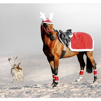 17 Best Images About Horse Property Christmas On Pinterest