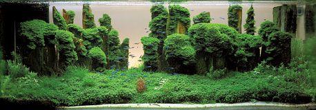 Grand Prize Works | The International Aquatic Plants Layout Contest, IAPLC 4th place Chen De Quan (Taiwan) Title: Towering Strange Peaks