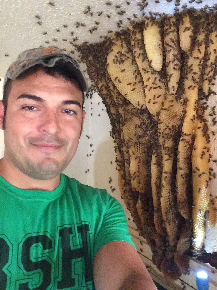 Extreme Bee Removal- Monster Exposed Hive indoors Mcallen ,Tx by Luis Sl...